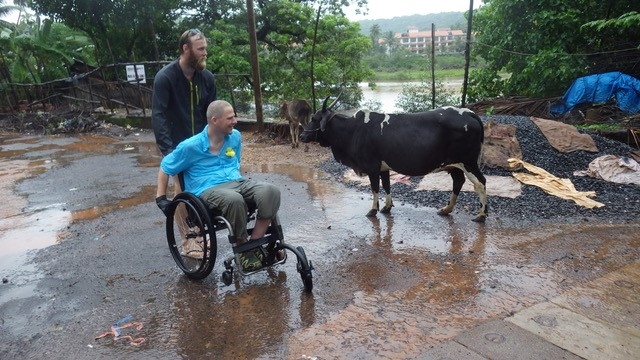 Dave and his PA encounter a cow while in Goa